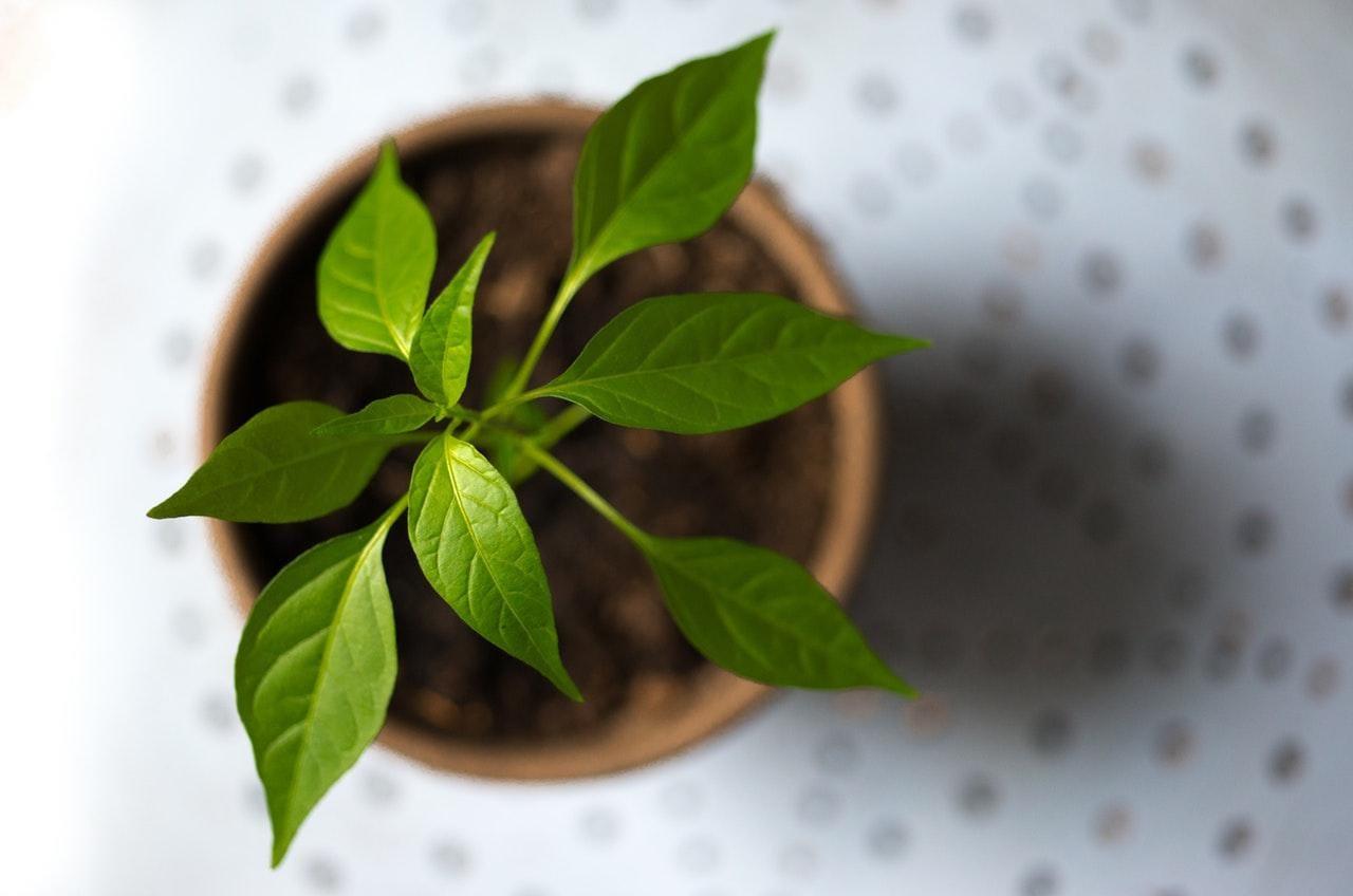 Grow a Plant